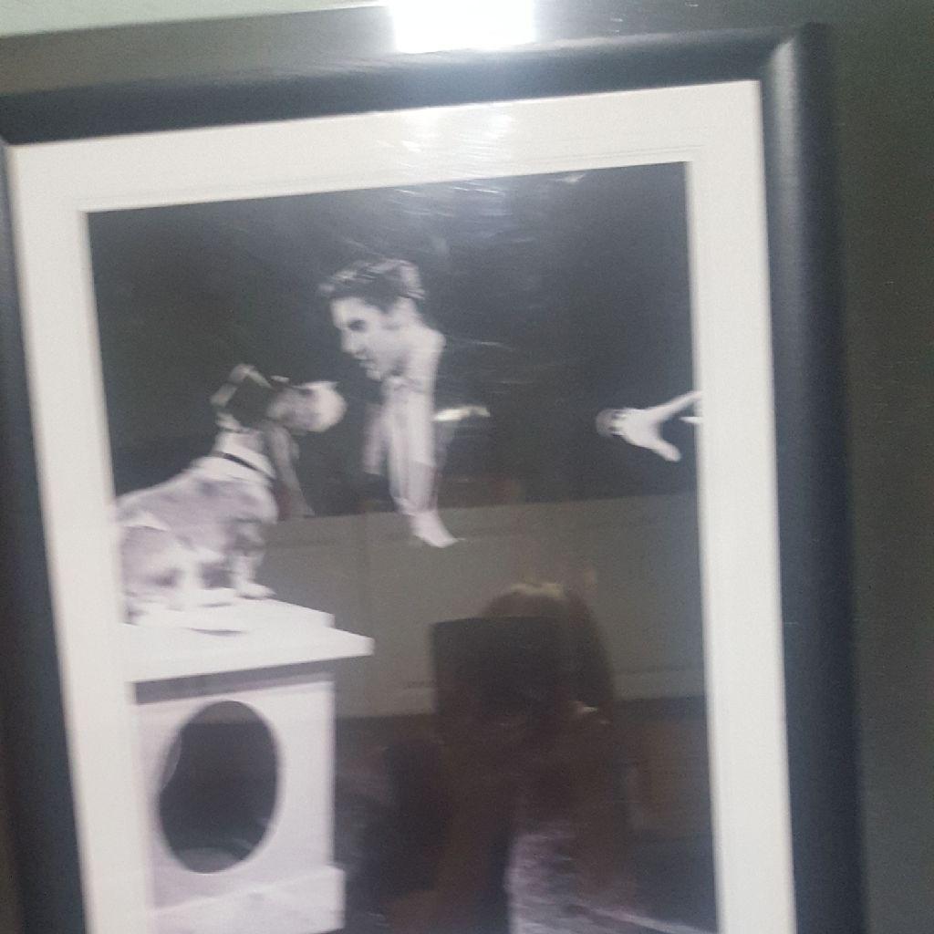 Elvis Photo  Hound Dog Framed.