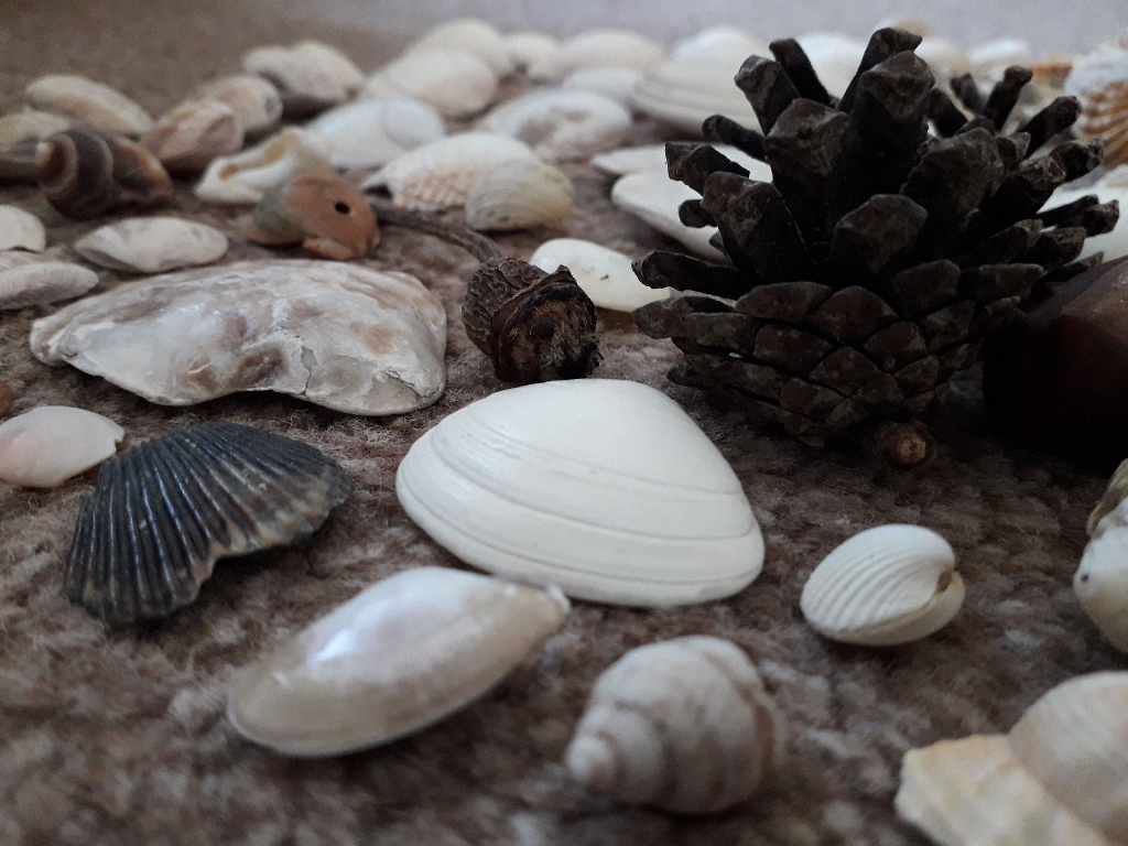 Shell and Rock selection