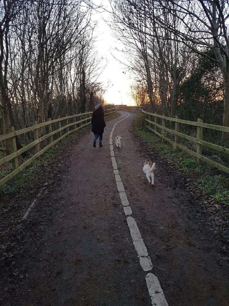 Walk n' Fetch - Reliable dog walking/ pet sitting