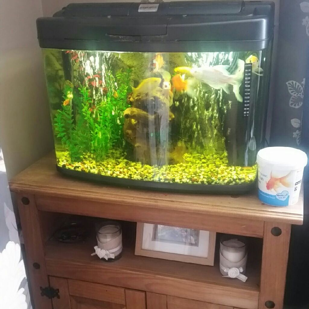 Fish tank and furniture