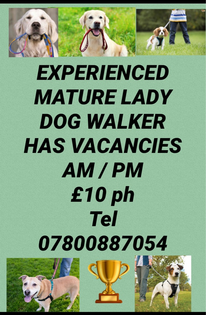 EXPERIENCED LADY DOG WALKER AVAILABLE
