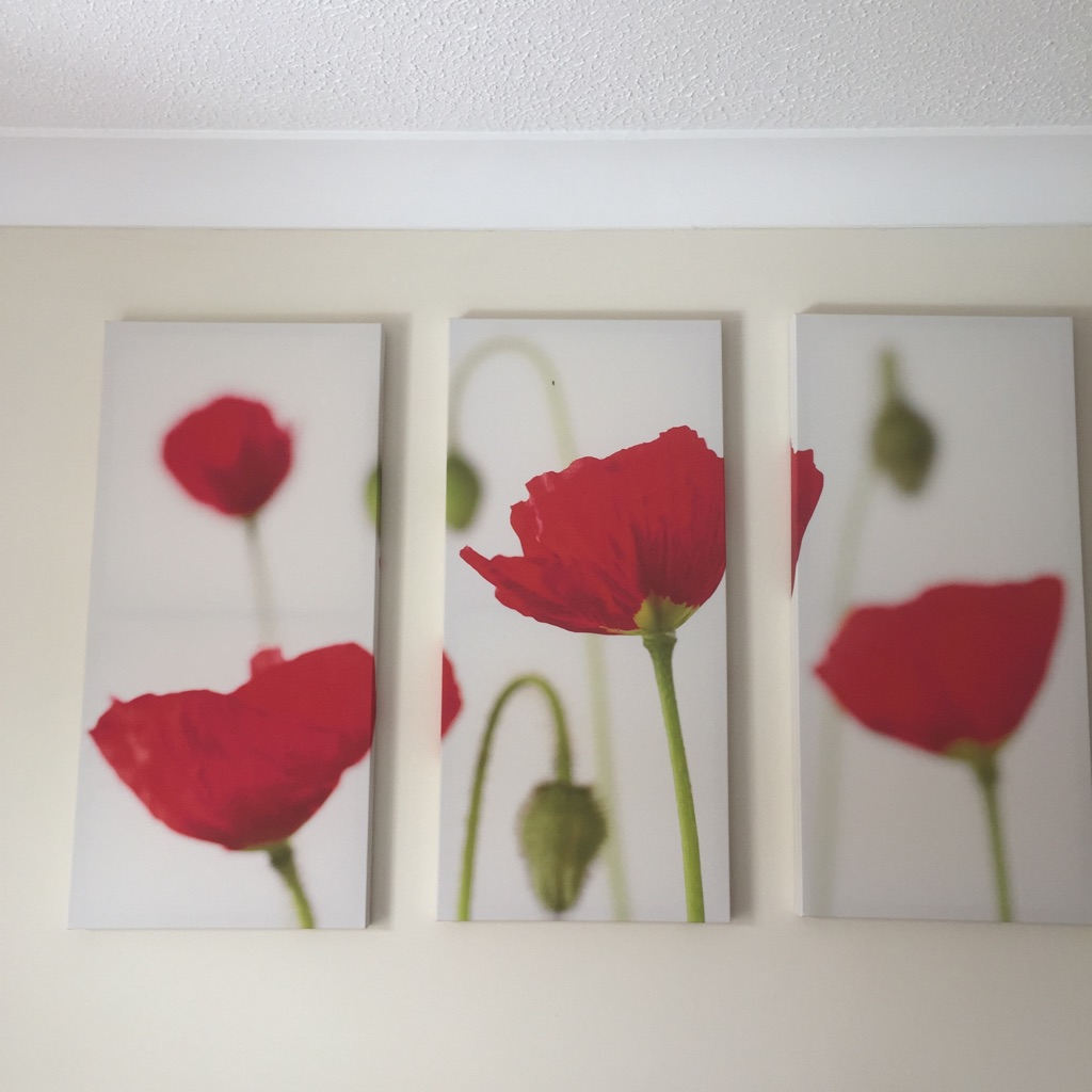 Poppies picture