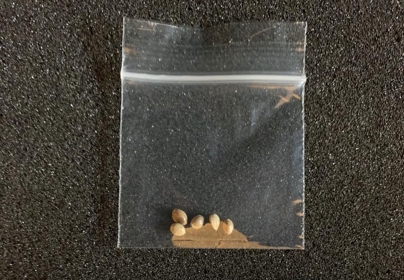 White Widow Auto Seeds X5