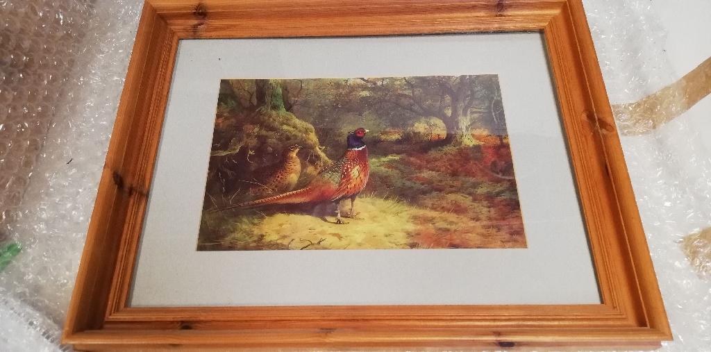 A pheasant print