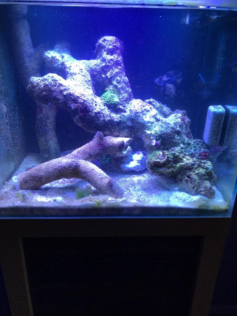 REDUCED Fluval sea reef m40 53L