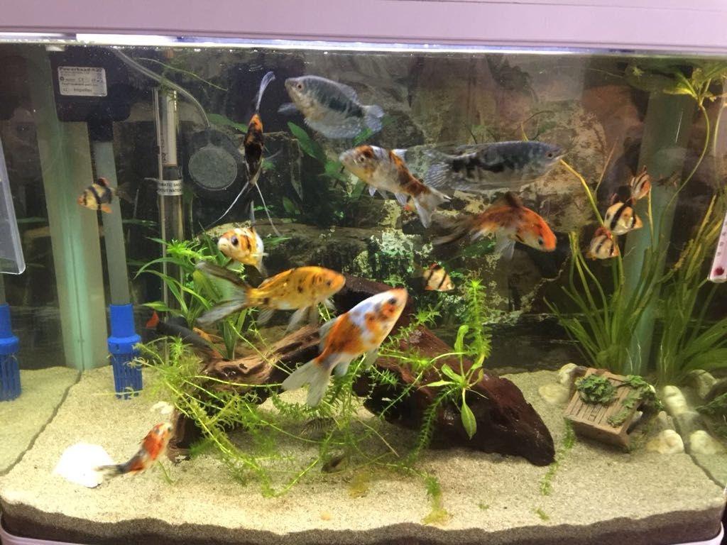 Stunning Aqua 95L tropical fish tank for sale