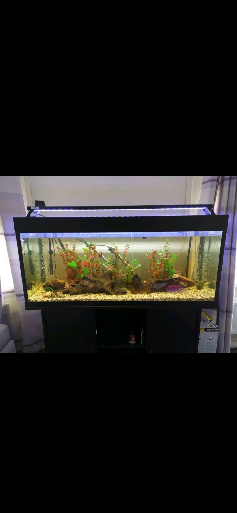 4ft fishtank