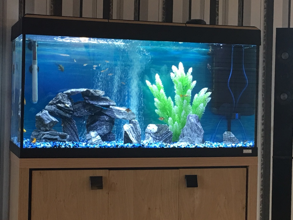 fish tank and cabinet fluval Roma 200
