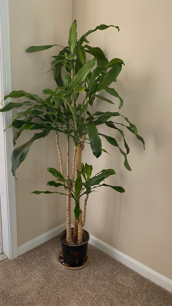 Indoor Live plants