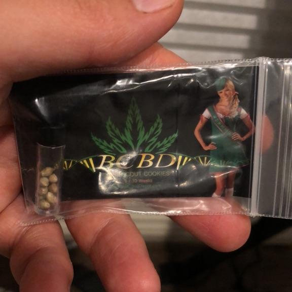 12 Bird Treat GSC seeds