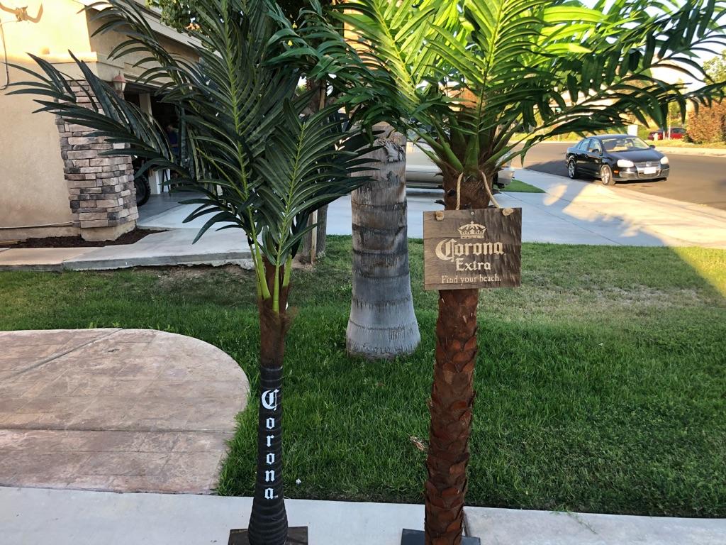 Corona Palm Trees