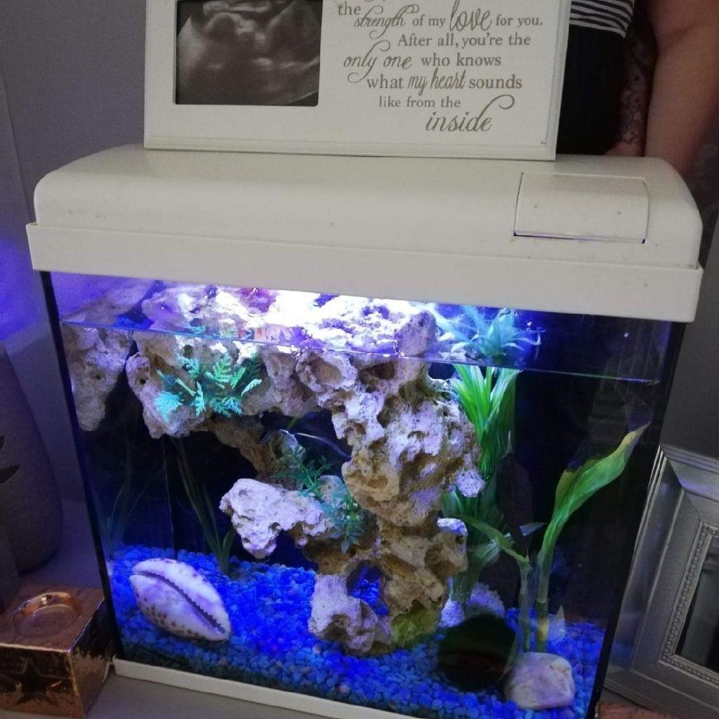 20 litre tropical fish tank