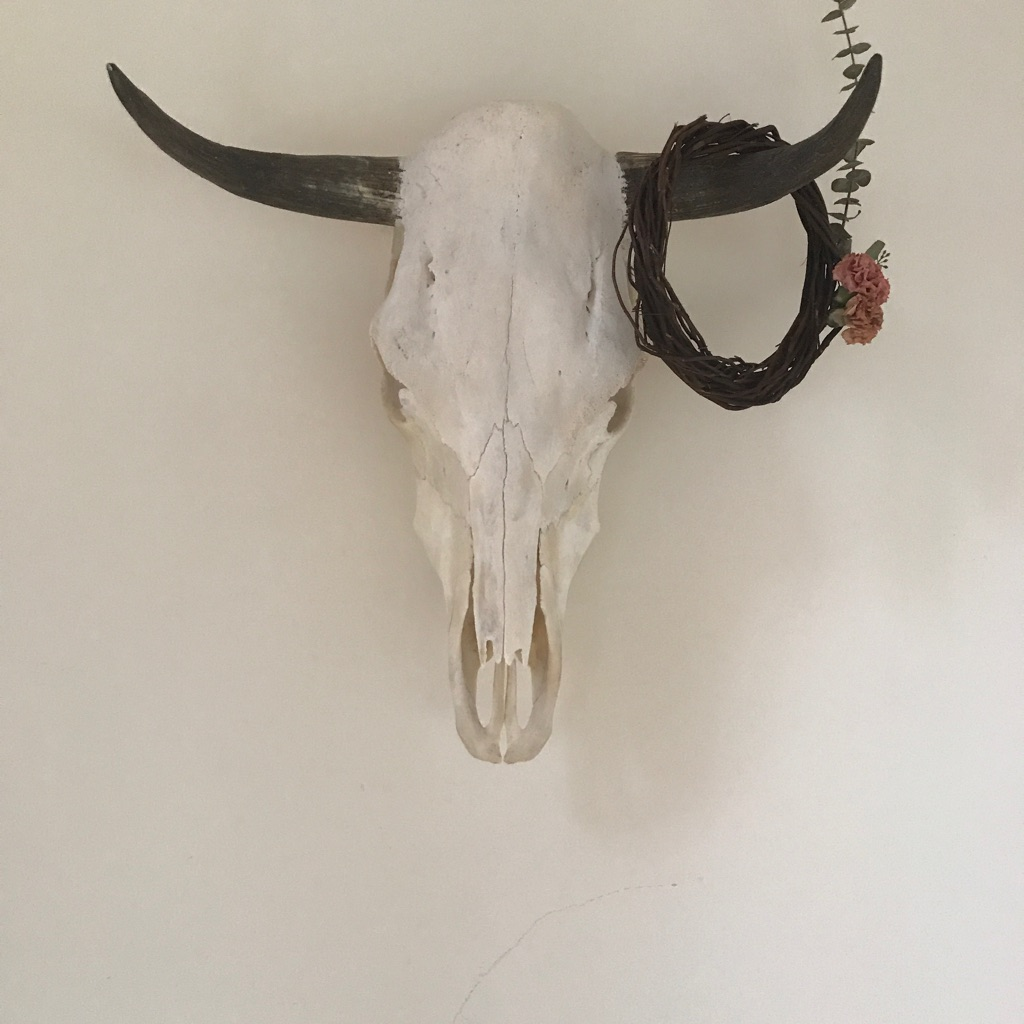 Authentic bull skull