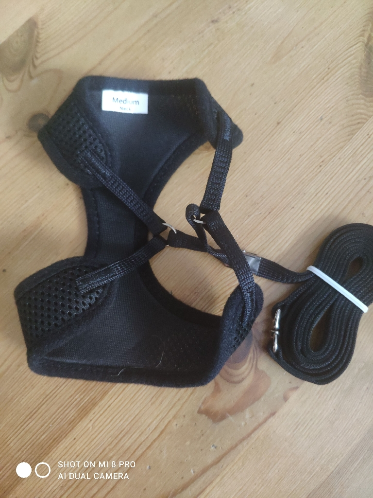 Cat harness with lead