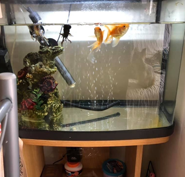 32ltr aquarium and stand