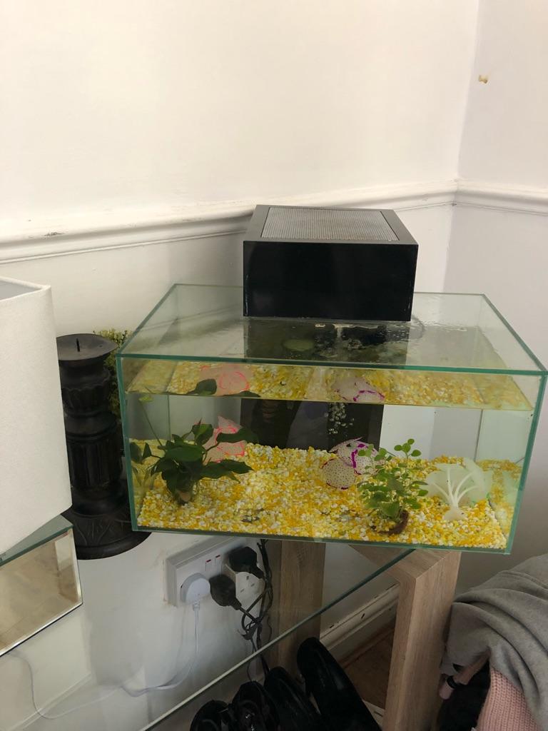 Bio fish tank