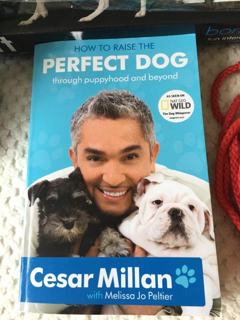 Bundle of doggy necessities