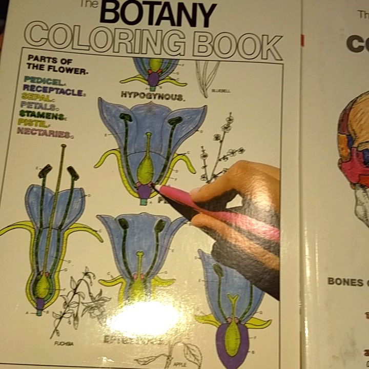 Anatomy Coloring Books