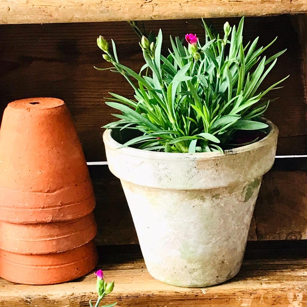 Rustic terracotta plant pots
