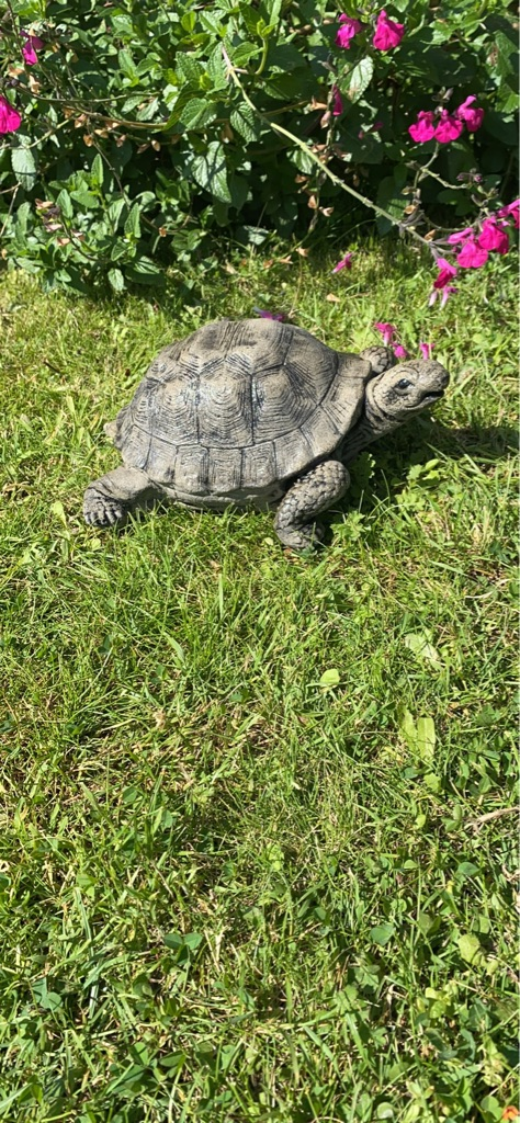 Handmade concrete tortoise