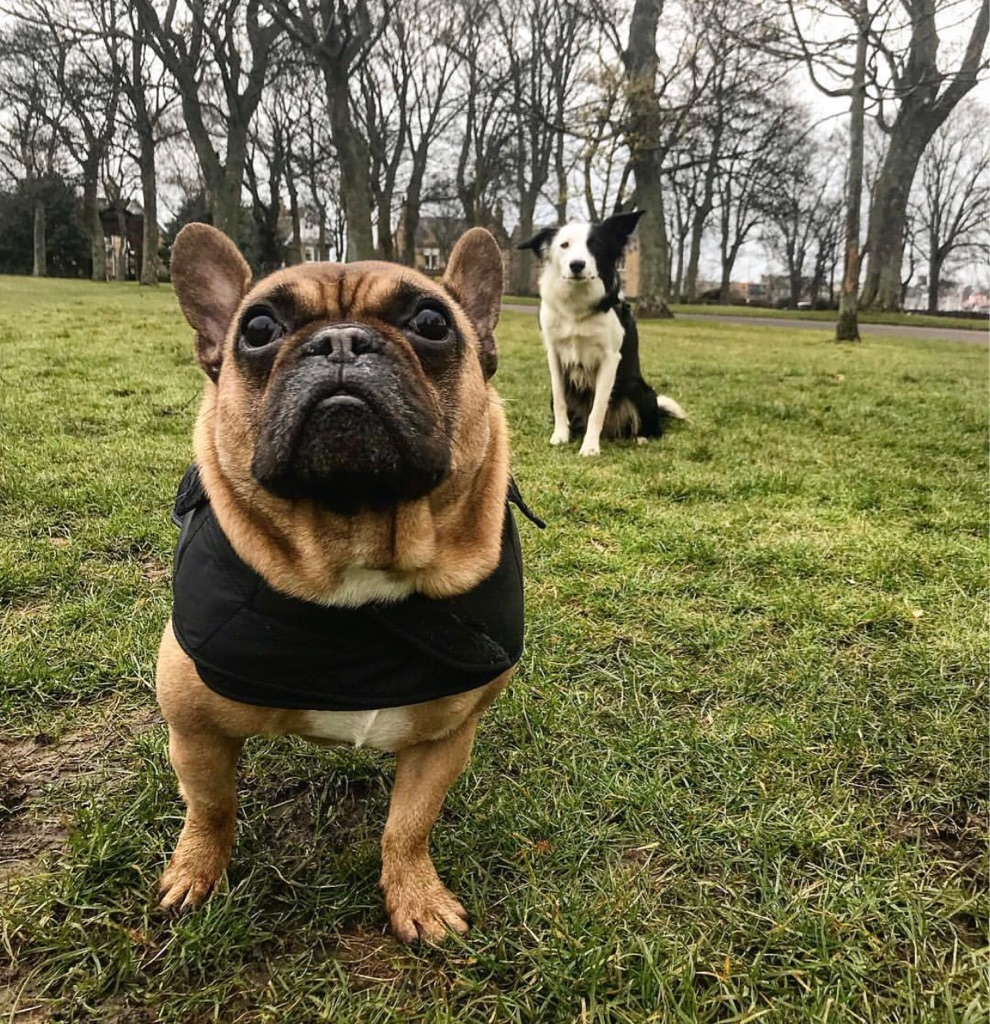 Dog Walking Service Edinburgh