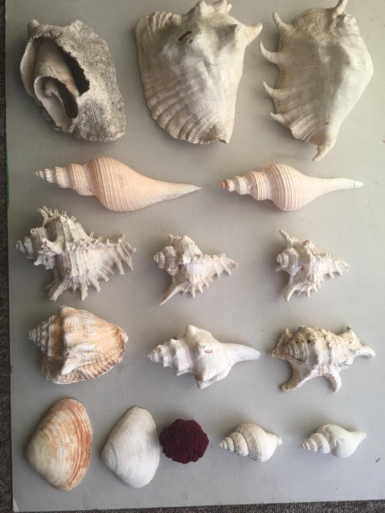 Lot of seashell