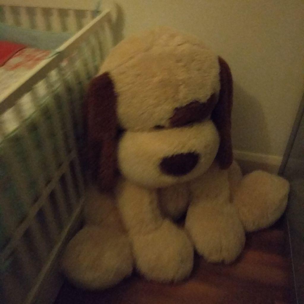 Soft cuddly dog,pet and smoke free house