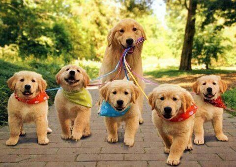 Dog walking and cleaning £10 per hour