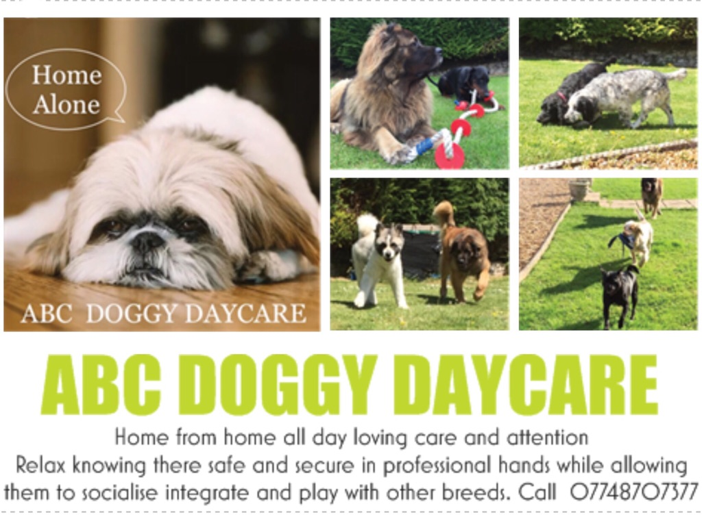ABC DOGGY DAYCARE