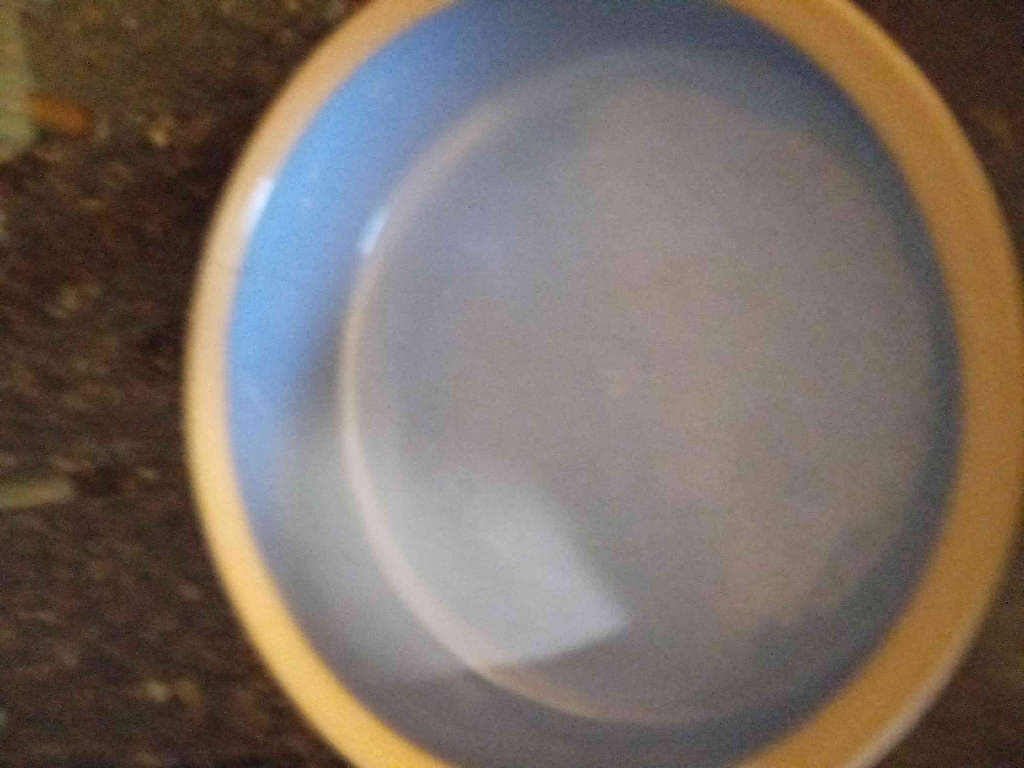 9.5 inches dog water bowl