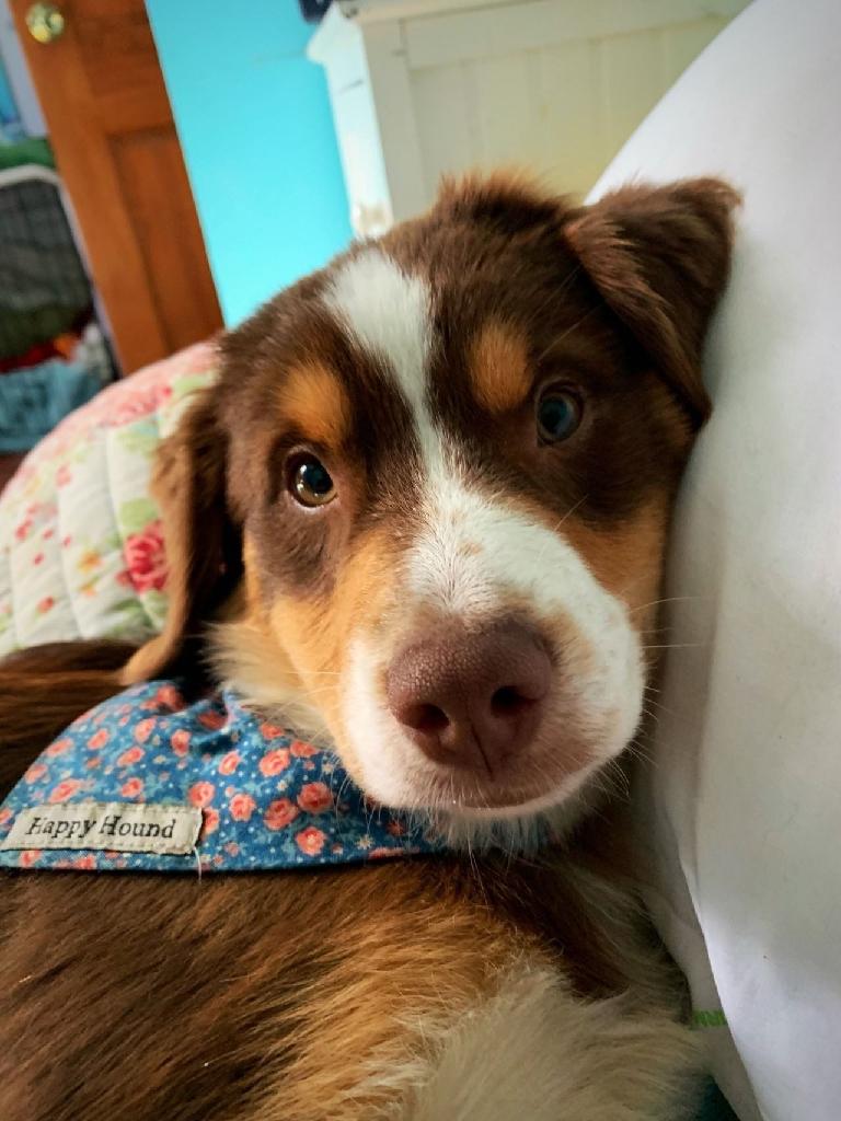 Home adorable dog