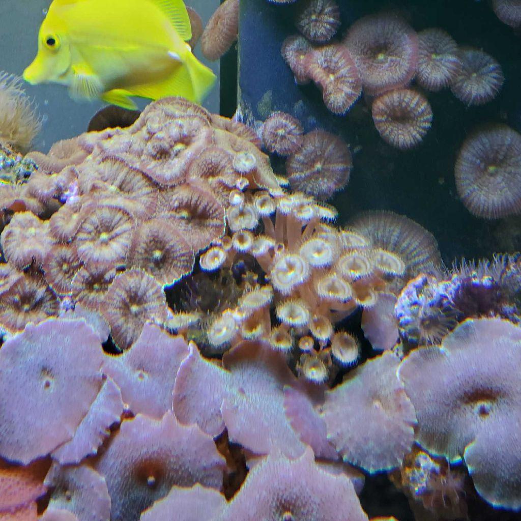 165 Gallon Saltwater Aquarium Setup