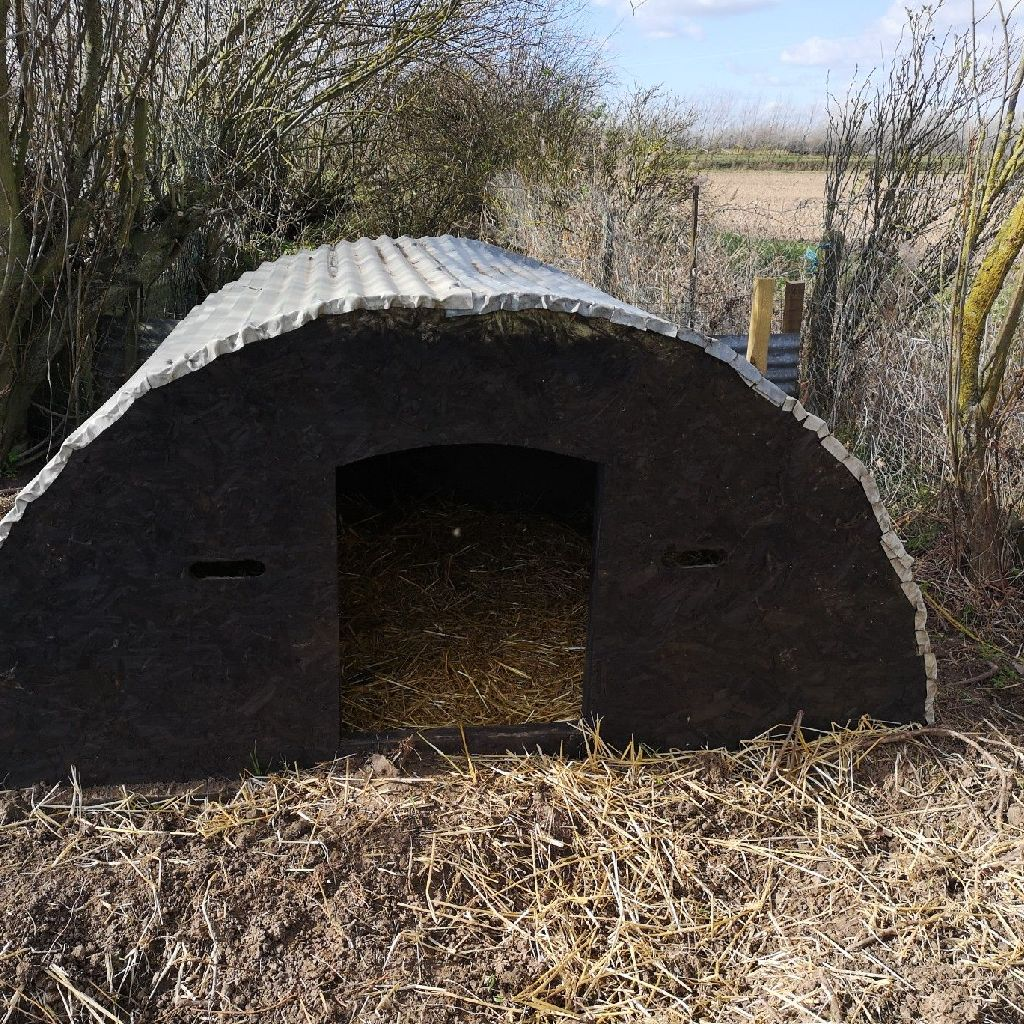 Pig Ark for sale