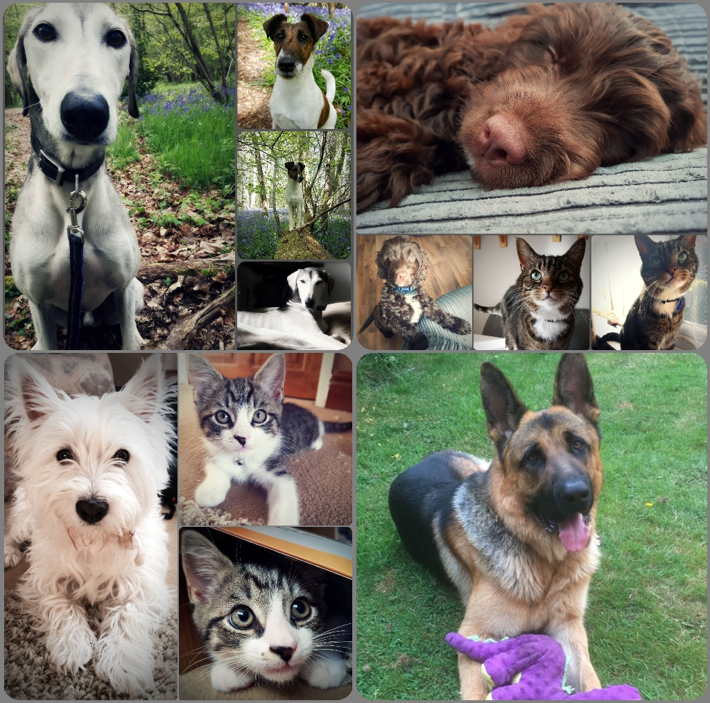 Pet Sitting, Home Boarding, Dog Walking and Pet Care Services