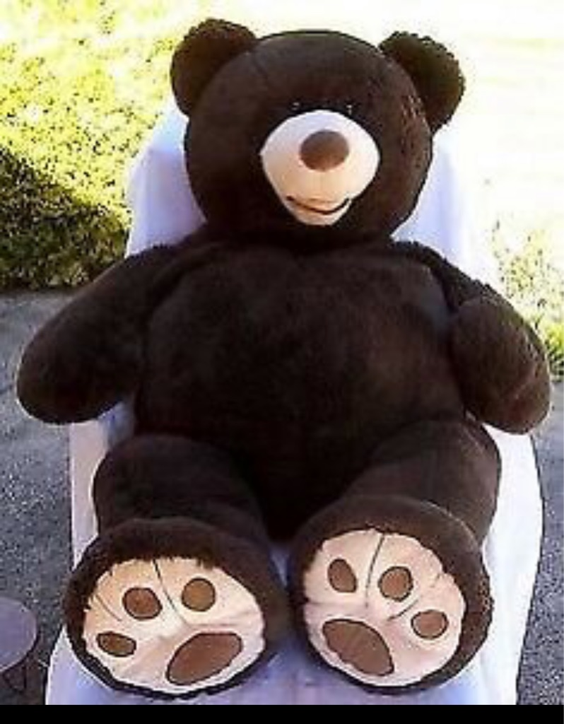 Big brown bear teddy