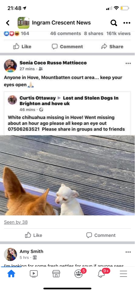 Lost chihuahua hove