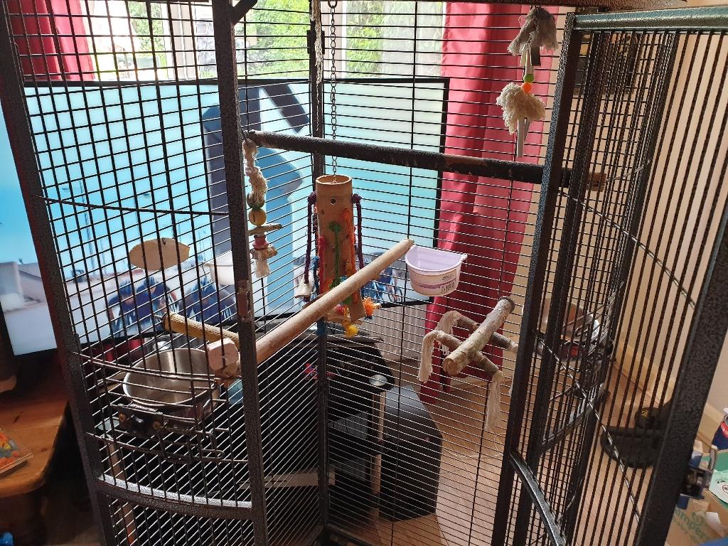 Parrots cage