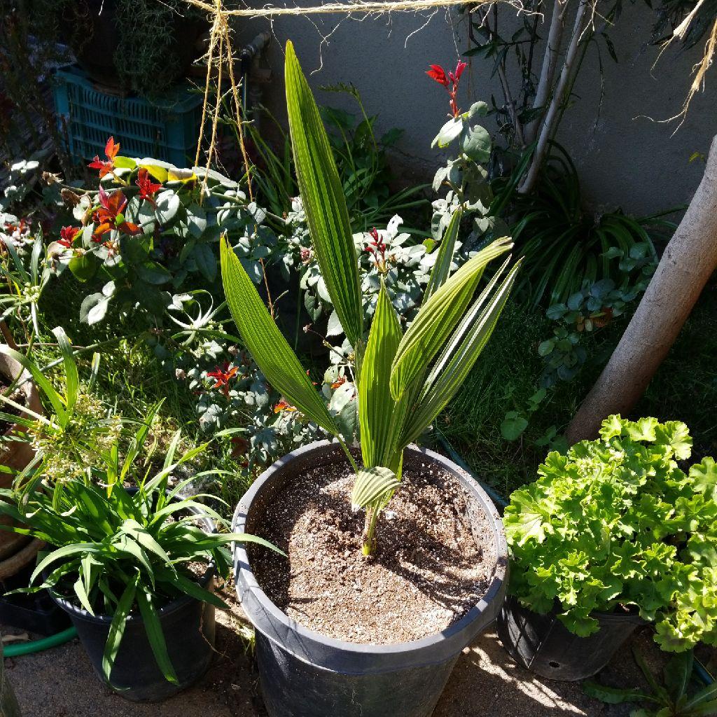 Green paradise palms