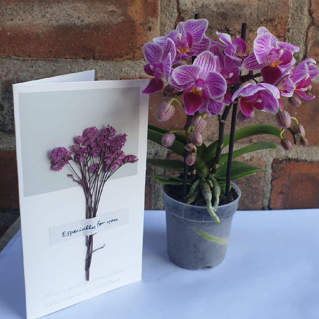 Mini orchid plant& Card Message