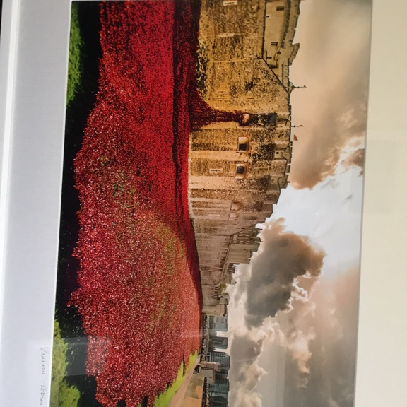 Ceramic Poppies Photograph 2014