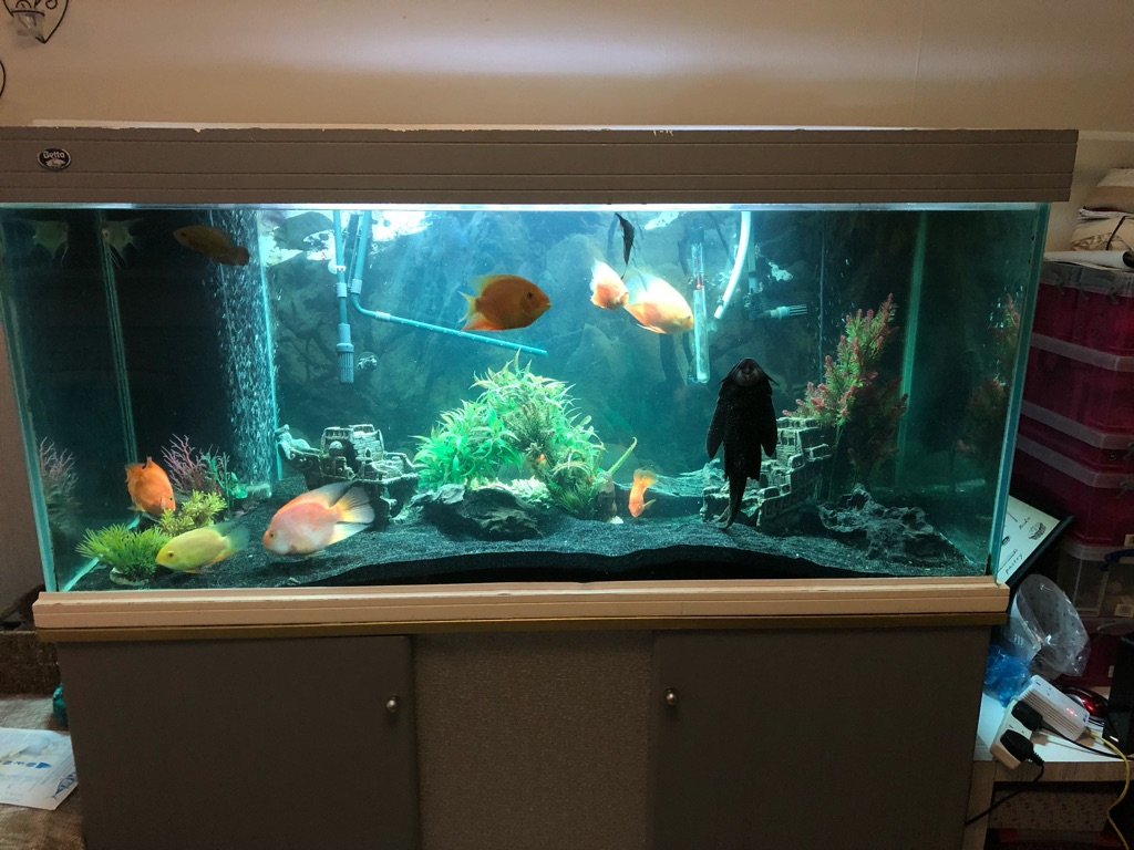 Large Fish Tank Plus Stand Cupboard