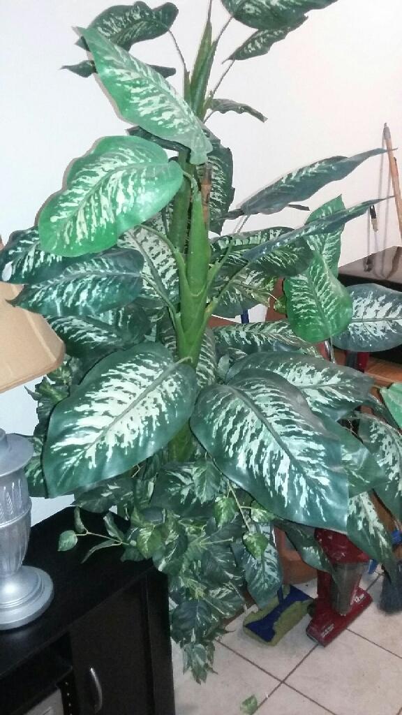 Large plastic plant