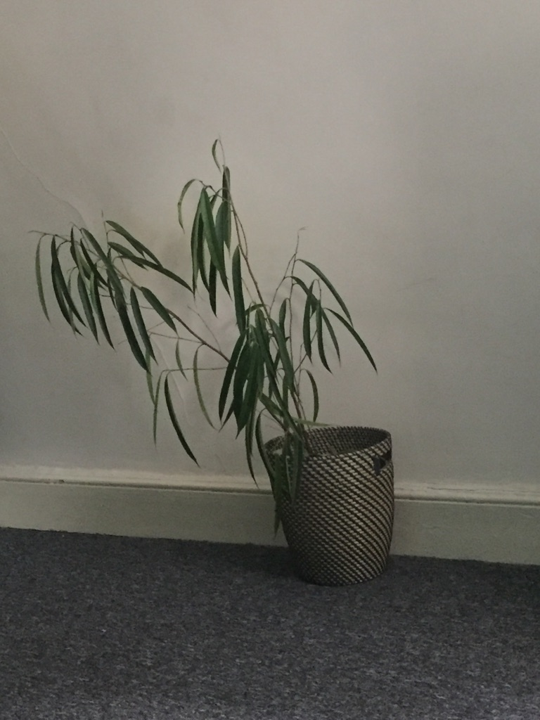 House plant and basket