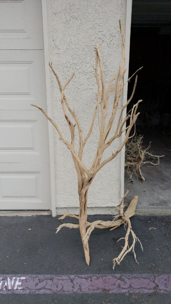 Ghostwood driftwood