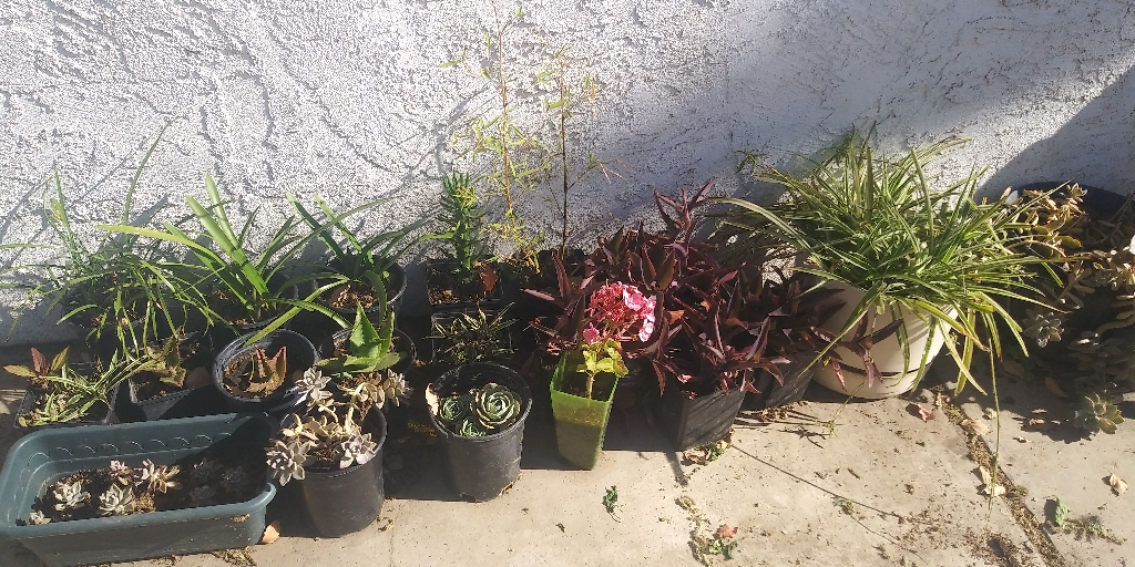 Variety of plants