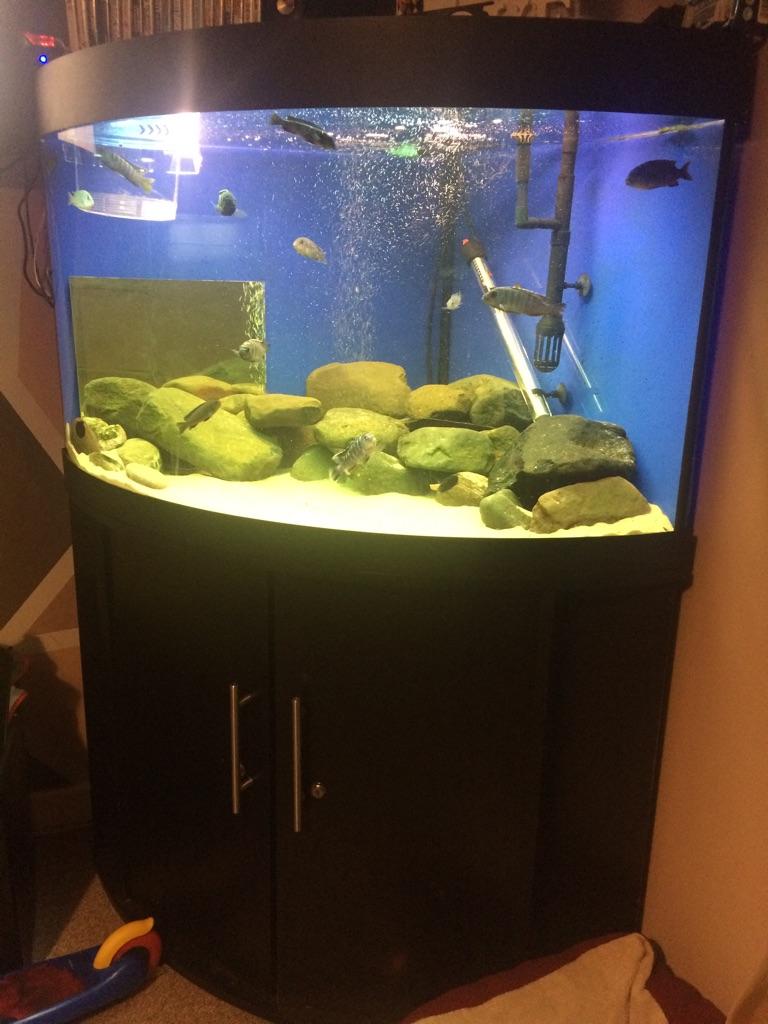 Corner fish tank full set up
