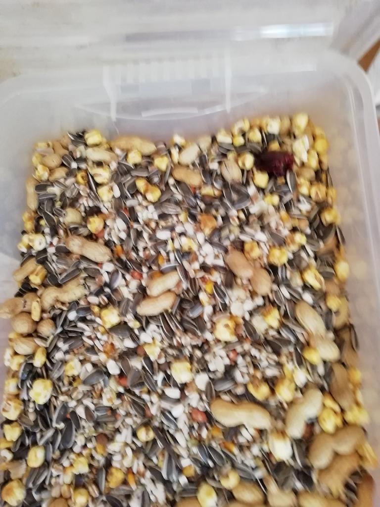 Birds seed