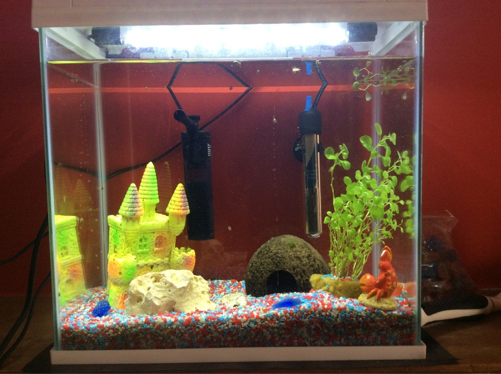 Aqua 27 litre fish tank plus accessories