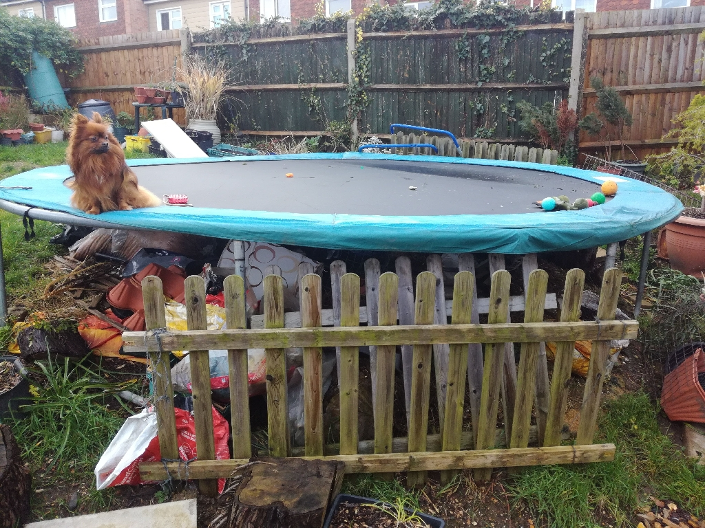 14ft trampoline - Used