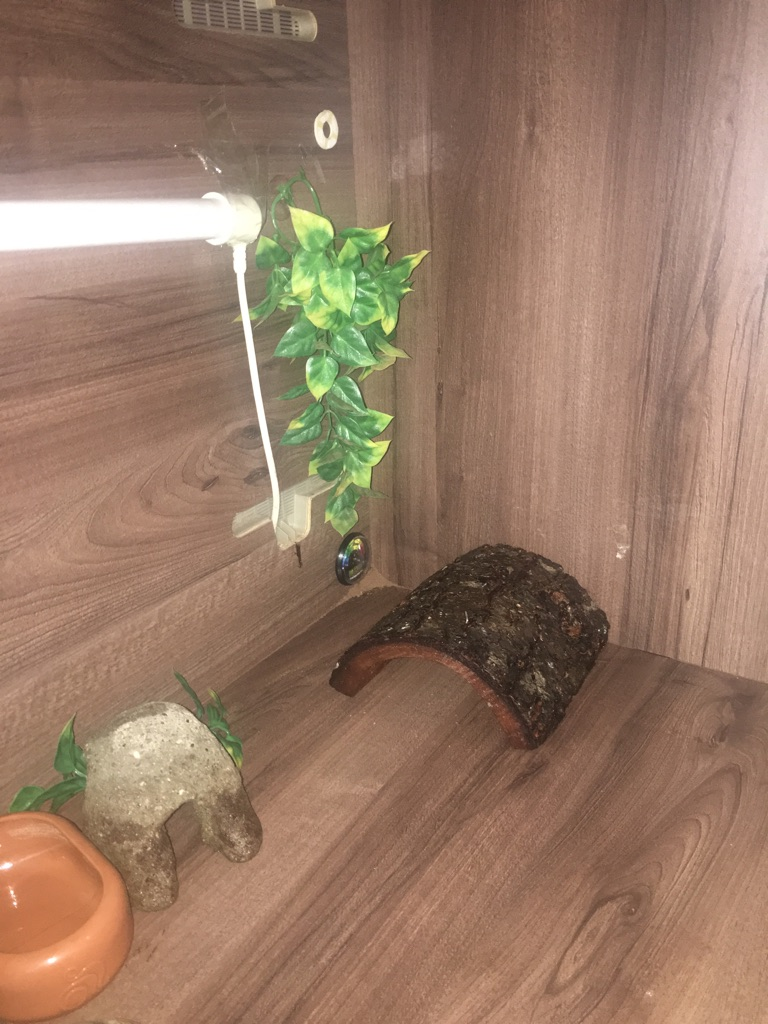 Reptile vivarium and more